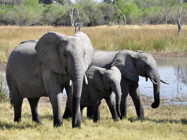 Tanzania safari holiday, tailor made