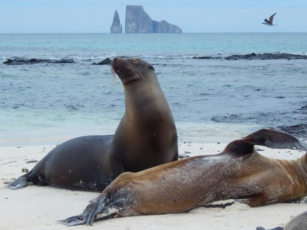 Classic Galapagos Island hopping