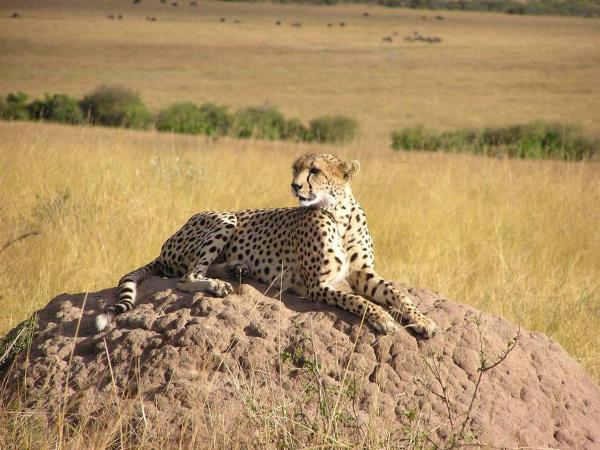 Kenya safari and beach holiday
