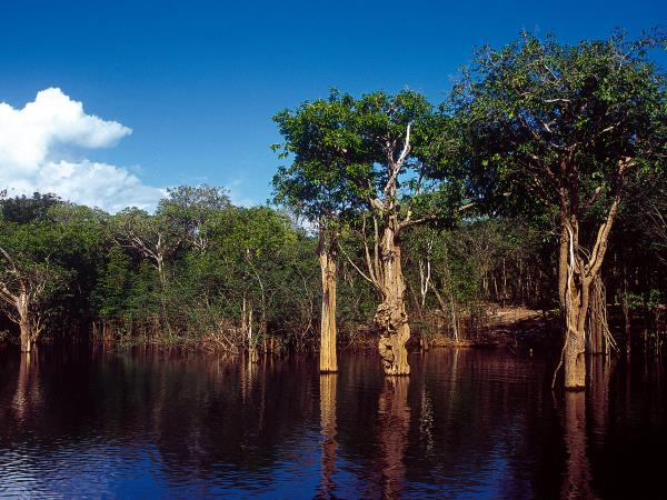 Amazon River Cruise, 7 days