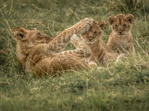 South Africa photography safari
