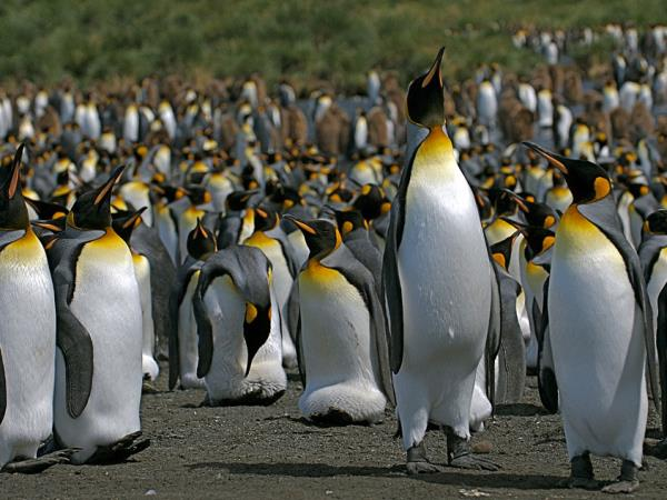 Antarctica, Falklands & South Georgia cruise