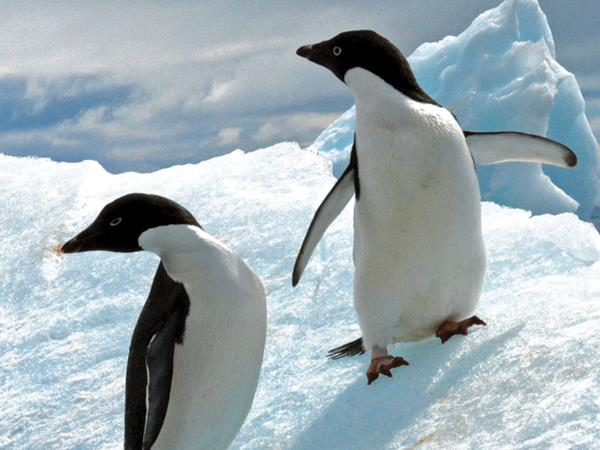 Antarctica expedition cruise, 11 days