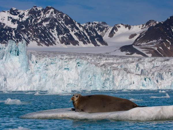 Spitsbergen wildlife cruise in the Arctic