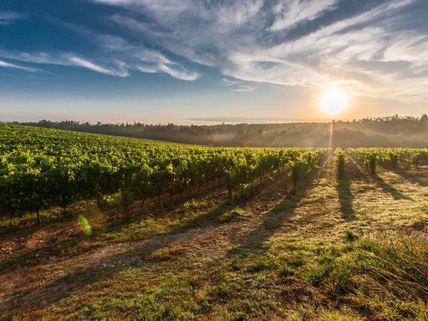 Bordeaux wine tour and Bay of Arcachon holiday