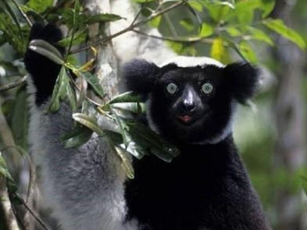 Madagascar tour with North or South Extensions