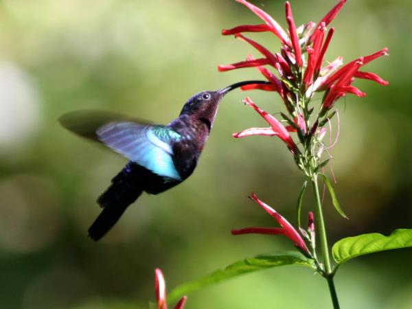 Dominica holiday, wildlife and activities