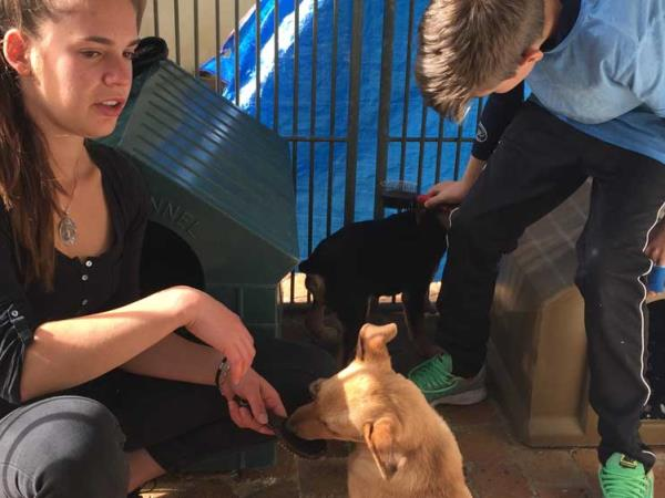 Dog and cat rescue volunteering in South Africa