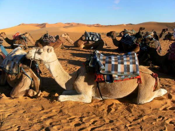 Family holiday for teenagers in Morocco
