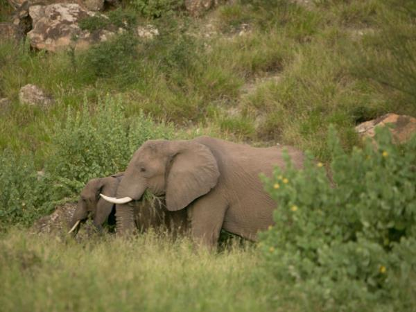 South Africa self drive safari in Limpopo province