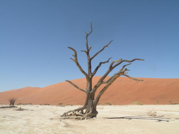 Privately guided Namibia holiday