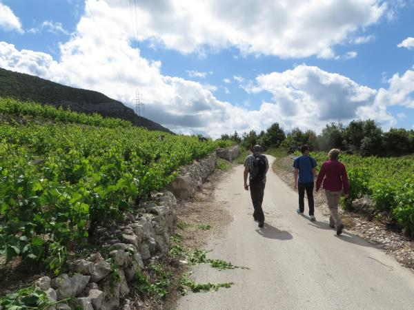 Walking and wine tasting holiday in Dubrovnik, Croatia