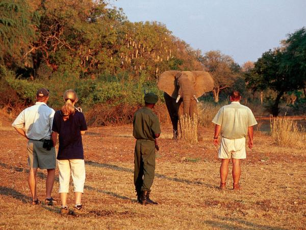 Zambia walking safari, tailor made