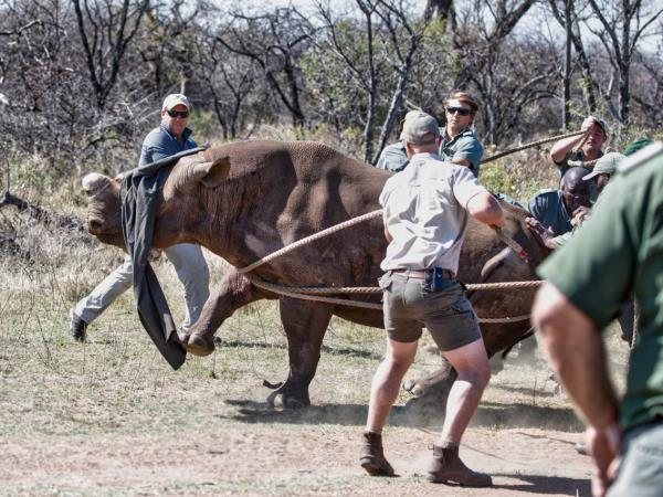 South Africa wildlife reserves conservation expedition