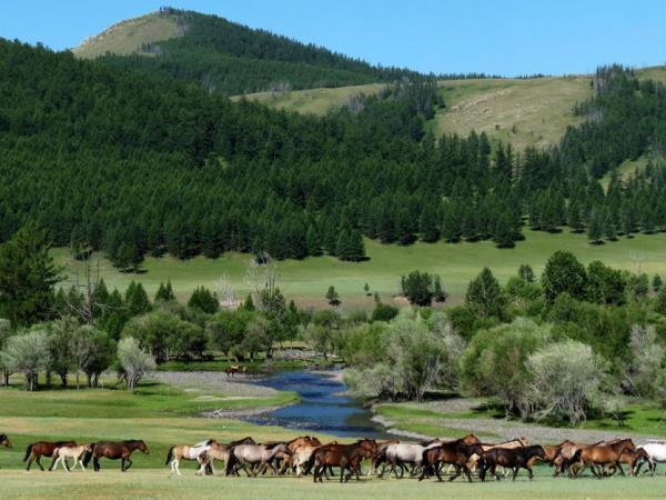 Mongolia tailor made holiday