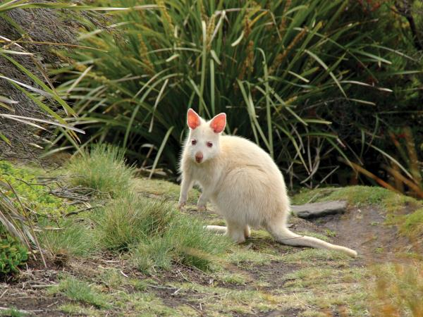 Tasmania wildlife tour