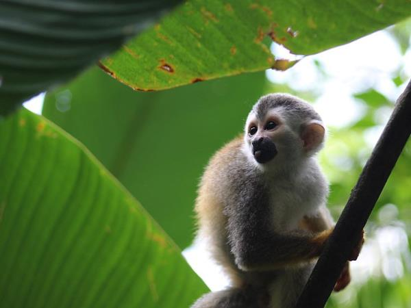 Costa Rica wildlife conservation