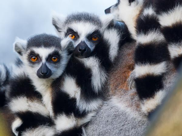 Classic Madagascar discovery tour, tailor made