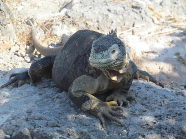 Galapagos & Ecuador holiday for families
