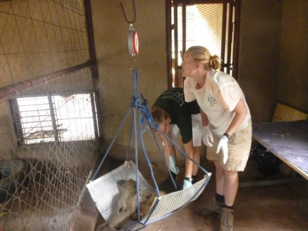 Malawi wildlife conservation holiday