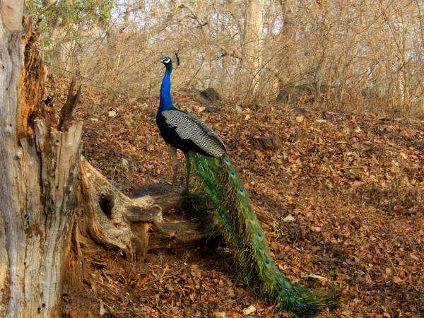History, culture & wildlife of India holiday