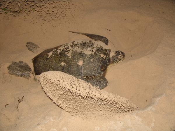 Cuba nature and culture tour with turtle viewing
