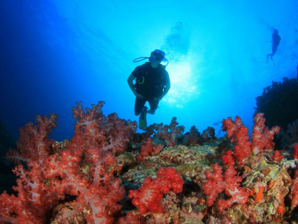Dive in Komodo and Flores Land Adventure