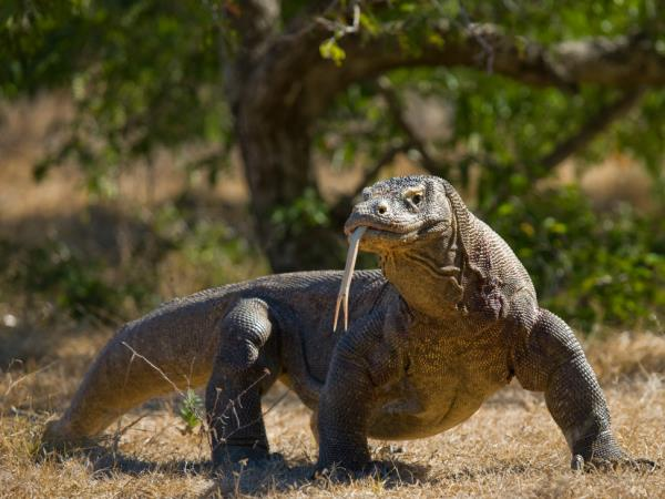 Komodo and Flores adventure holiday in Indonesia