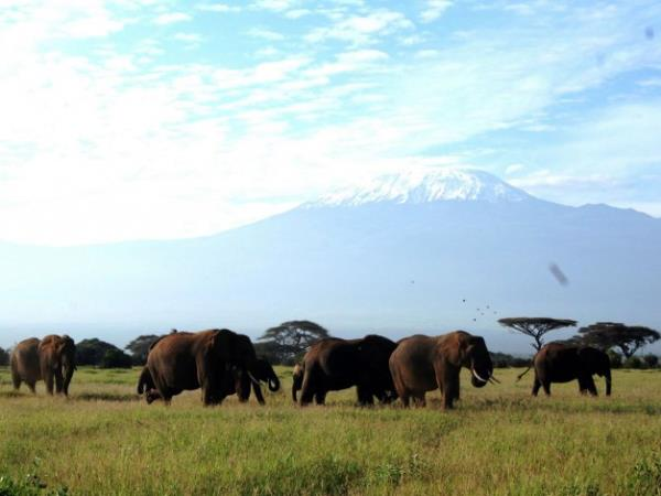 Kenya and Tanzania safaris