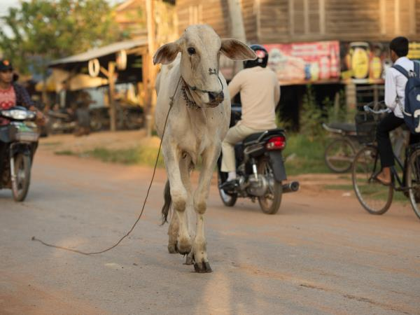 Cambodia tailor made holiday, Beyond The Ordinary