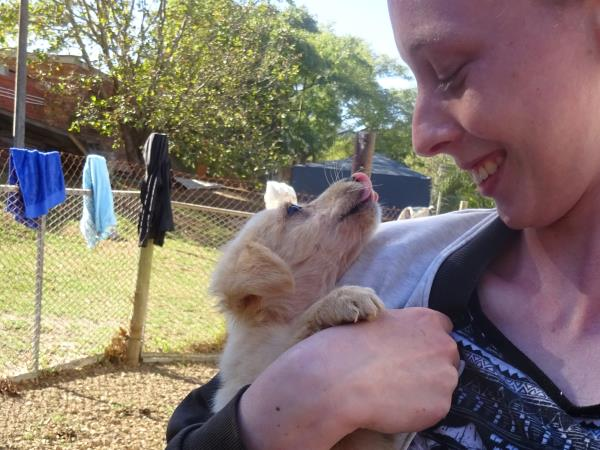 Dog rescue volunteering in South Africa