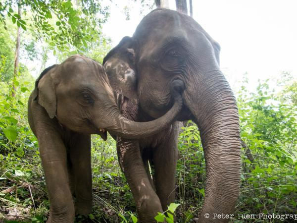 Stay with Elephants near Chiang Mai, Thailand