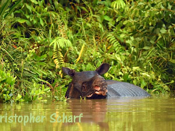 Javan Rhino tracking expedition in Indonesia