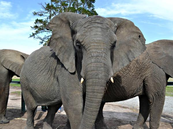 Volunteering with Elephants in South Africa