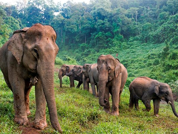 Laos elephant volunteering for over 40s