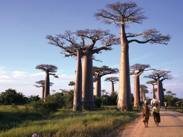 Madagascar adventure holiday, 21 days