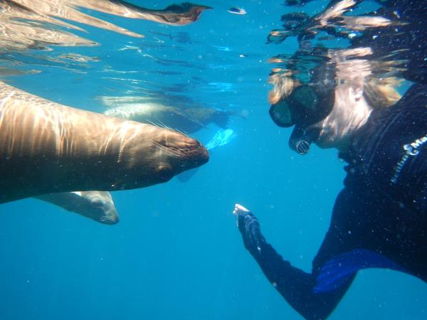 Mexico multi-activity and whale adventure