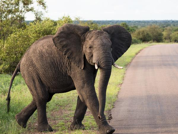 Kruger & coast holiday in South Africa