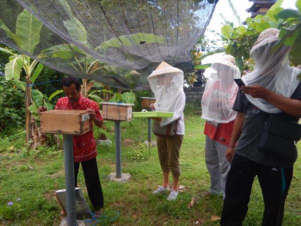 Bee Conservation in Bali