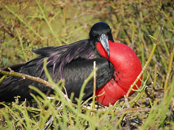 Galapagos island hopping tailor made holiday