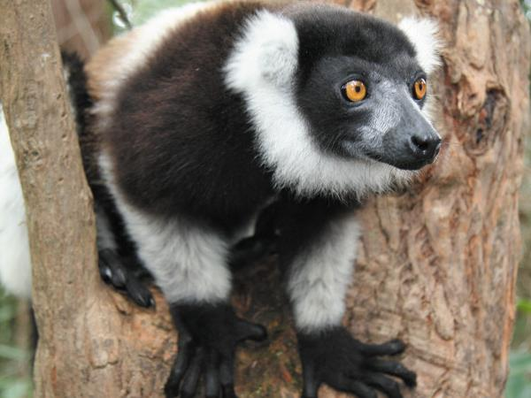 Madagascar hike & bike holiday