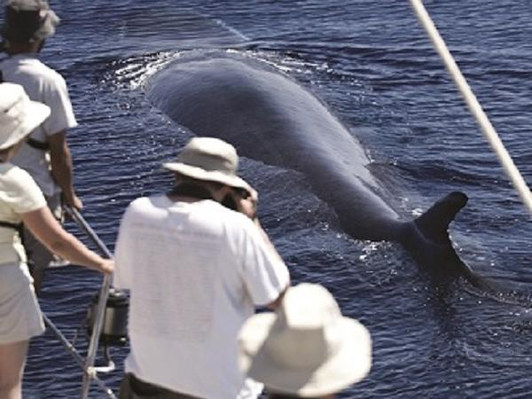 Blue whale Azores family holiday