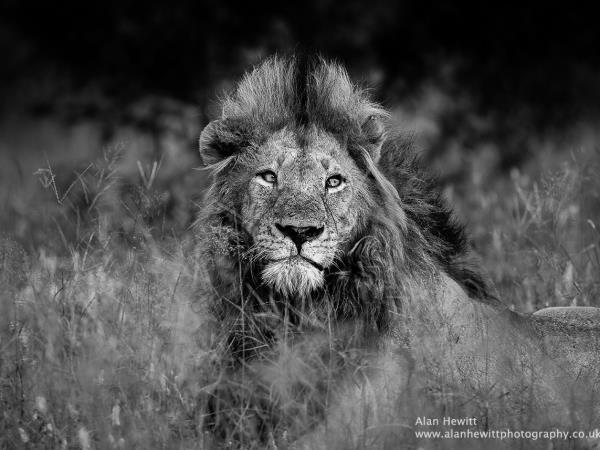Botswana and South Africa wildlife photography tour