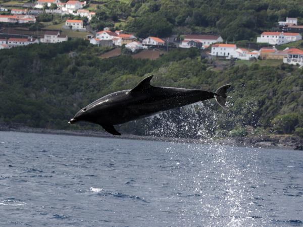 Azores Whale and Dolphin watching holiday