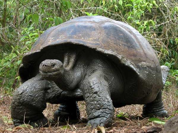 Costa Rica and Galapagos wildlife holiday