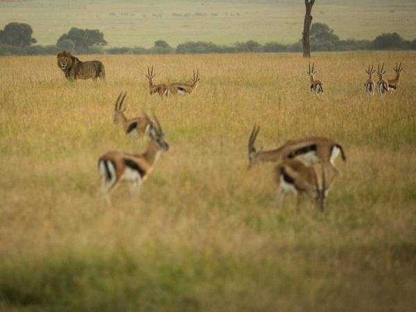 Family safari and beach holidays in Kenya