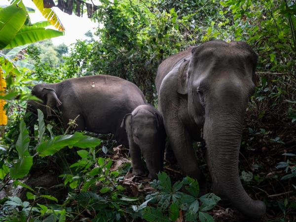 Stay with the Karen hilltribe and watch elephants in Thailand