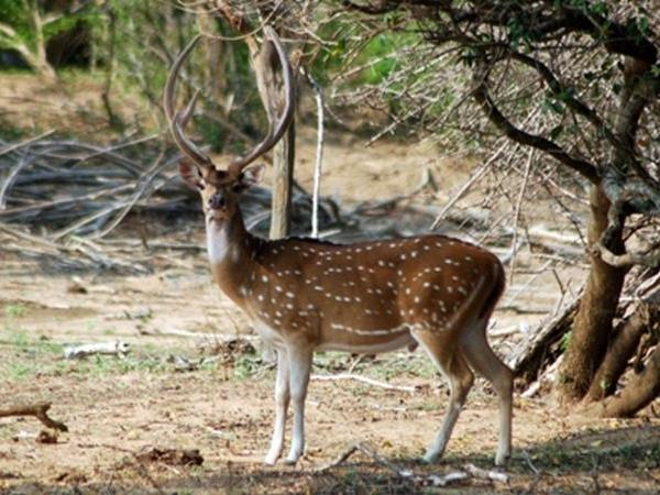 India tiger safaris on a budget