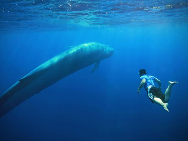 Sri Lanka blue whale holiday