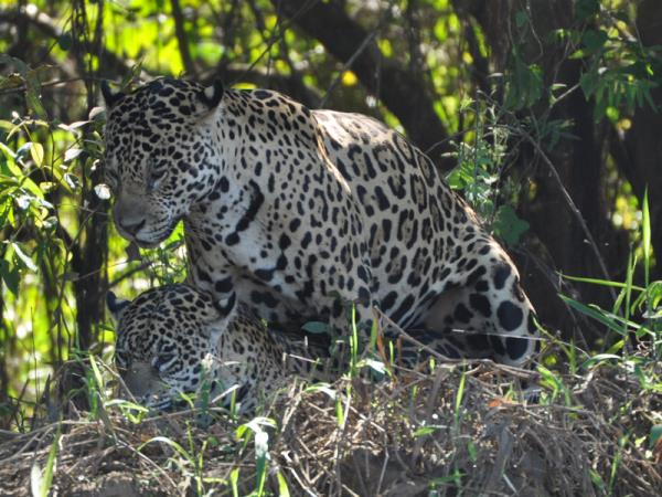 Pantanal wildlife holiday in Brazil